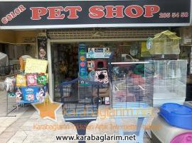 Color Pet Shop